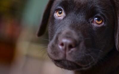 Európska krajina čelí škandálu: Odhalili v nej raj pre zoofilov, ktorí nútia psy nosiť silonky a lodičky