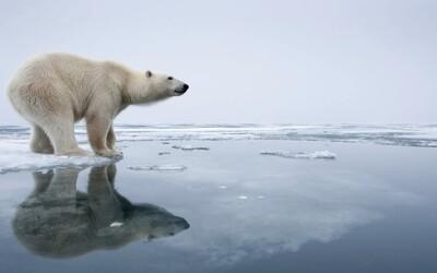 Experti na klimatickou změnu tvrdí, že rok 2020 je poslední, kdy můžeme zachránit Zemi