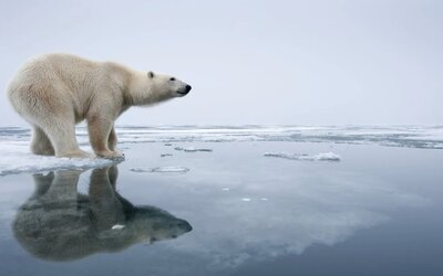 Experti na klimatickú zmenu tvrdia, že rok 2020 je posledný, kedy môžeme zachrániť Zem