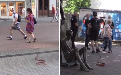 Exploited strašil nič netušiacich ľudí s umelou anakondou. V uliciach vyvolal paniku a nachytal aj policajtov