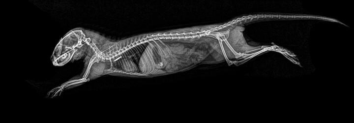 Oregonská zoo dala svá zvířata pod rentgen. Nabídla tak fascinující pohled na známé živočichy