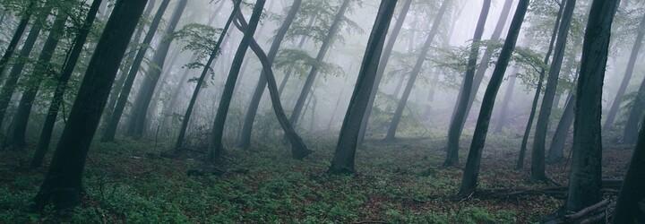 Loni byly každou vteřinu káceny lesy o velikosti jednoho fotbalového hřiště
