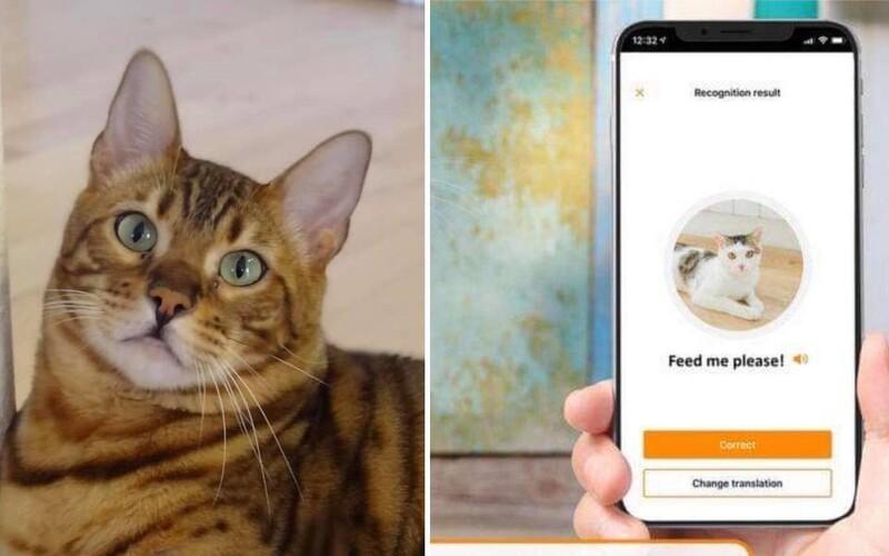 Tato aplikace ti přeloží mňoukání tvé kočky do lidské řeči.