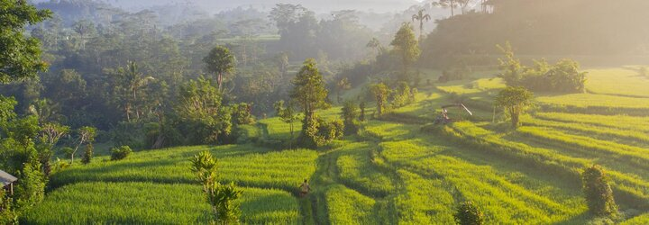 Bali ti neponúka iba dychberúce pláže. Spoznaj výnimočné čaje a kávu z tohto ostrova