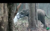 Fajčiaci slon? Obrovské zviera si v prírodnej rezervácii užívalo dym z horiaceho stromu, za čím sa skrýva fascinujúci dôvod