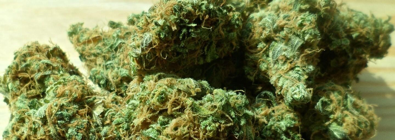 Fajčiť marihuanu, cestovať a dostávať za to každý mesiac zaplatené? Americká firma hľadá zamestnancov na lákavú pozíciu