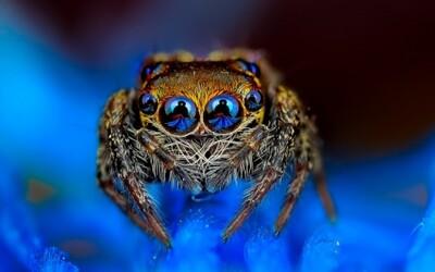 Farebné pavúky a iný hmyz, ktorý by ste radi vymenili za ten vo vašej domácnosti