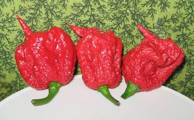 Farmár omylom vypestoval najpálivejšiu chilli papričku na svete. Po prehltnutí môžeš aj umrieť