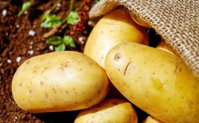 Farmáři zuří: Kaufland prodával brambory za 1 korunu