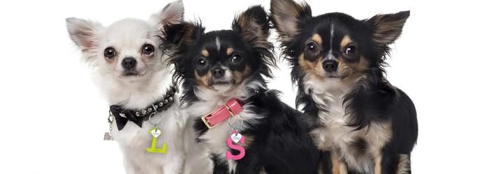 KUKU PET pomáha psíkom v núdzi, čím im spríjemňuje pobyt v útulkoch a zabezpečuje vakcíny, krmivo aj hračky