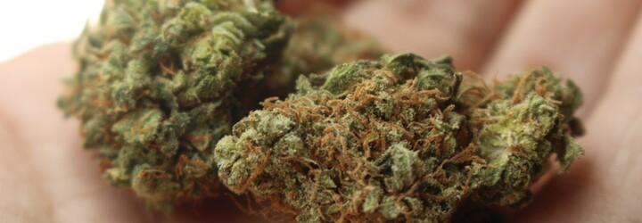 Marihuana či čaj? Kanada bude legálny kanabis predávať v špeciálnych baleniach, ktoré si možno v domácnosti ľahko pomýliš