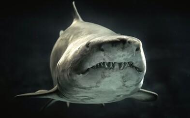 Fotí žraloky zblízka, strach ale nemá. 10 záběrů na predátory, z nichž mrazí