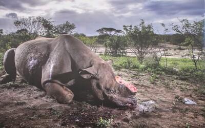Fotka mrtvého nosorožce s odseknutým rohem se stala nejsilnějším záběrem divoké přírody tohoto roku