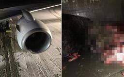 FOTO: Na Aljaške trafilo lietadlo pri pristávaní medveďa. Zviera po náraze zabilo, jeho mláďaťu sa našťastie vyhlo