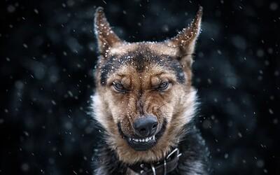 Fotograf dokazuje, že i zvířata mohou mít nadupané portréty. Podívejte se, jak je zachytil