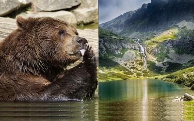 Fotografovanie medveďov či liptovské syry. Čo by mal podľa prestížneho britského denníka vyskúšať každý turista na Slovensku?