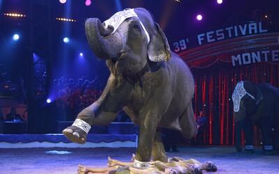 Francie chce zakázat používání divokých zvířat v cirkusech. Vláda také plánuje skoncovat s norkovým farmami