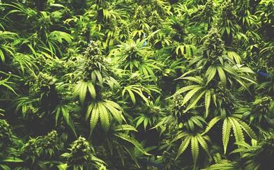 Řecko legalizovalo marihuanu pro lékařské účely. Evropou právě prochází vlna marihuanové revoluce, která upravuje legislativu i vnímání