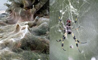 Řeckou pláž pokryli vynalézaví pavouci obrovskou, 300metrovou pavučinou. Využívají ji k rozmnožování