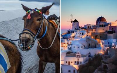 Grécky ostrov Santorini zarába na krutej atrakcii. Týrané somáriky v horúčavách bez vody vozia ľudí a keď sú choré, hodia ich do mora