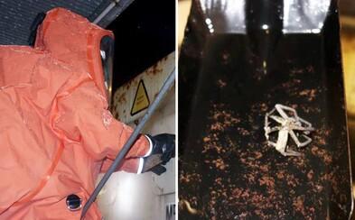 Hasiči museli nejjedovatějšího pavouka planety odchytit v ochranných oblecích. Smrtelný živočich se do Evropy dostal v kontejneru