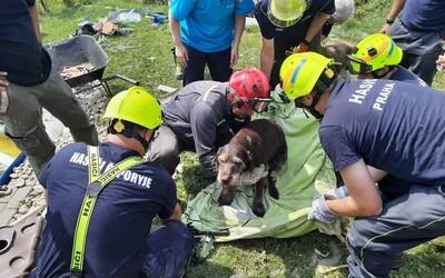 Hasiči na Hodonínsku zachránili psí život. Mazlíčka našli pod troskami zničeného domu