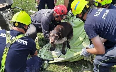 Hasiči vytáhli z trosek po tornádu na Moravě zraněného psa. Vystrašeného chlupáče předali do rukou veterináři