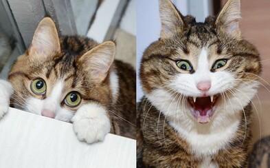 Hendikepovaný kocour baví svými grimasami internet. Navzdory nelehkému osudu si život užívá naplno