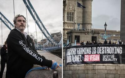 Herec Joaquin Phoenix se přivázal k transparentu na londýnském mostě, kde vyzýval k veganství