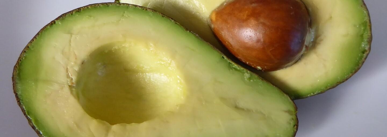 Hipsteri smútia, avokádo v skutočnosti nie je vegánska potravina. Po technickej stránke aj pri jeho produkcii trpia živočíchy