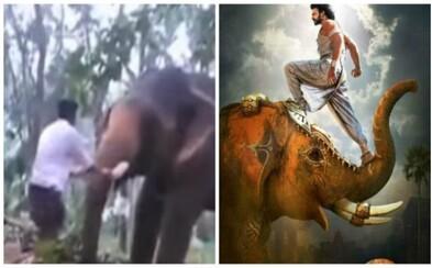 Hlupák chcel vyliezť na slona po chobote, ale o chvíľu skončil v bezvedomí. Zviera ho odhodilo o viac ako 5 metrov ďalej