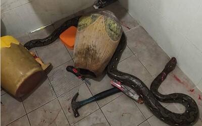 Horor v kúpeľni: Ženu napadol had, dobila ho kladivom