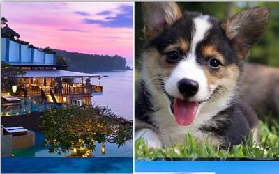 Hostel na Bali je plný zachránených šteniatok. Lacné ubytovanie si ľudia zamilovali