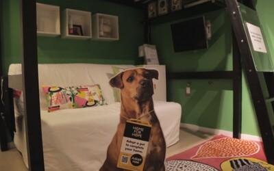 IKEA ti k posteli pribalí aj psa v rámci úspešného programu adopcií