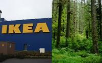 IKEA vysadila 3 miliony nových stromů v deštném pralese, který lidé zdevastovali kácením a ohněm