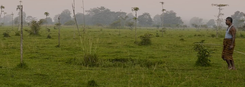 Ind strávil posledných 40 rokov sadením stromov. Vytvoril les, ktorý obsadili tigre, nosorožce aj slony
