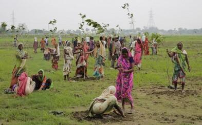 India sa pokúsila o svetový rekord - vysadiť 50 miliónov stromov v priebehu jedného dňa