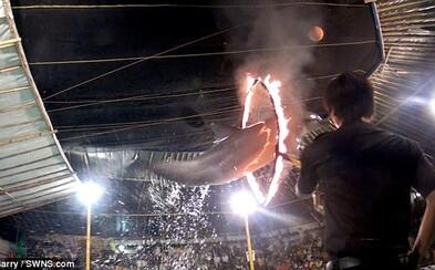 Indonézsky cirkus, v ktorom sú delfíny nútené preskakovať cez horiace obruče. Mnohé z nich kvôli zlému zaobchádzaniu zomierajú