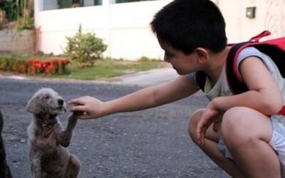 Inšpiratívny príbeh o chlapcovi, ktorý pomáha psíkom