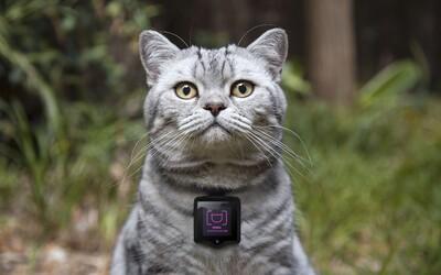 Instagram už budú môcť používať aj mačky. Stačí im nasadiť obojok