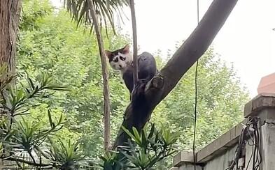 Internet ovládlo nové zvířátko. Čínská studentka našla na ulici nejsmutnější kočku na světě