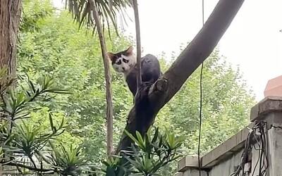 Internet ovládlo nové zvieratko. Čínska študentka našla na ulici najsmutnejšiu mačku na svete