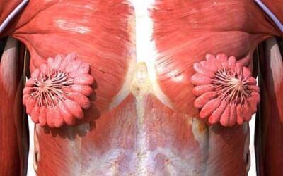 Internet zaskočili mliečne žľazy v ženských prsníkoch. Množstvo ľudí si uvedomilo, že doteraz videli len mužské svalstvo