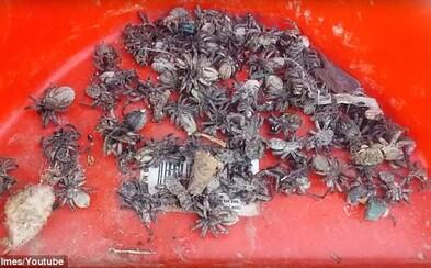 Invázia ako z najhoršej nočnej mory. Ženin dom zaplnili tisíce pavúkov, ktoré utiekli zo zaplaveného jazera