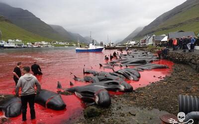 Island plánuje v dalších 5 letech zabít více než 2 000 velryb