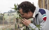 Itálii zřejmě čeká referendum o dekriminalizaci marihuany. Petici podepsalo 500 tisíc lidí