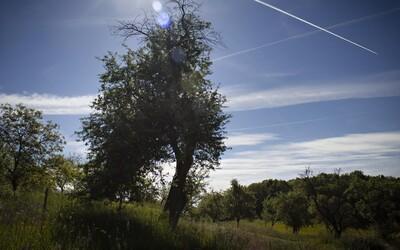 Jabloň z Bošáce bojuje o titul európskeho stromu roka. Pomôžte jej hlasovaním v náročnej konkurencii