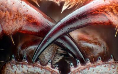 Jak vypadá sítnice myšky nebo dělící se buňky? Soutěžní mikrofotografie jsou jako z jiného světa