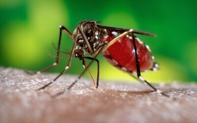 Jaký průběh mají nebezpečné viry jako zika, ebola či ptačí chřipka? Dokáže jim organismus snadno podlehnout?
