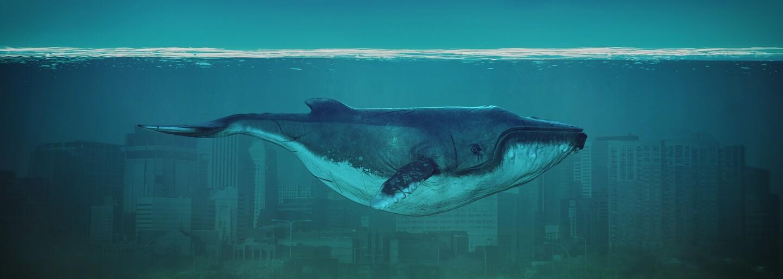 Japonci chcú po 32 rokoch obnoviť komerčný lov veľrýb. Tvrdia, že ich je už zase dostatok